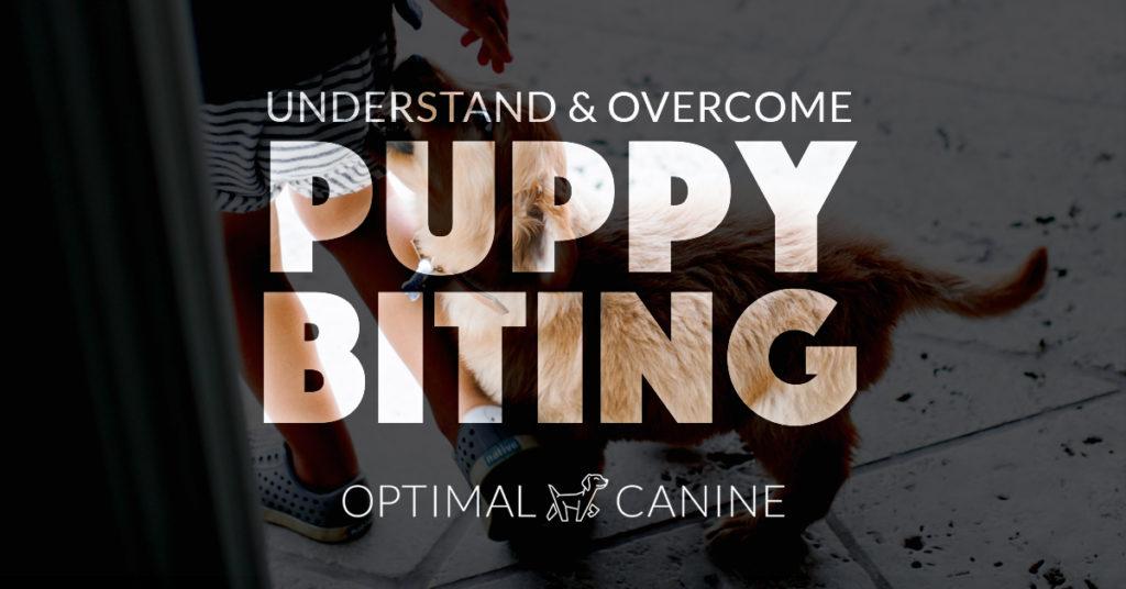 puppybiting