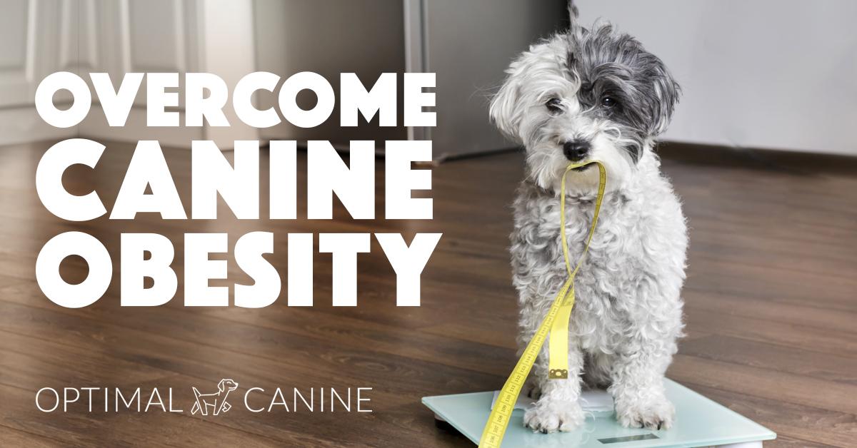 canineobesity