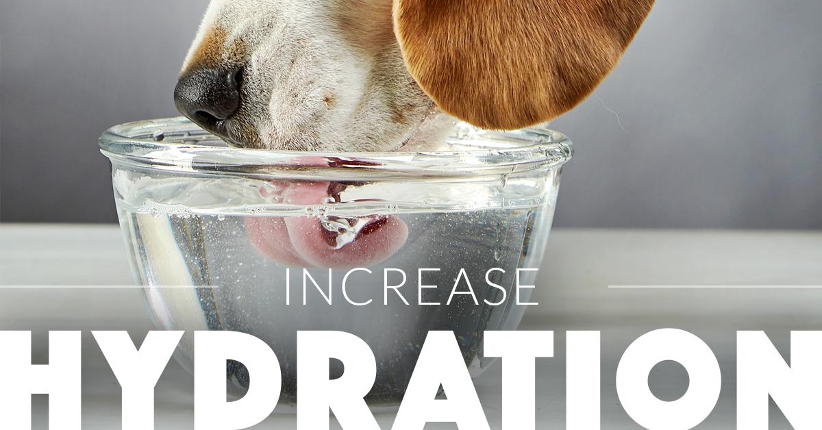 doghydration
