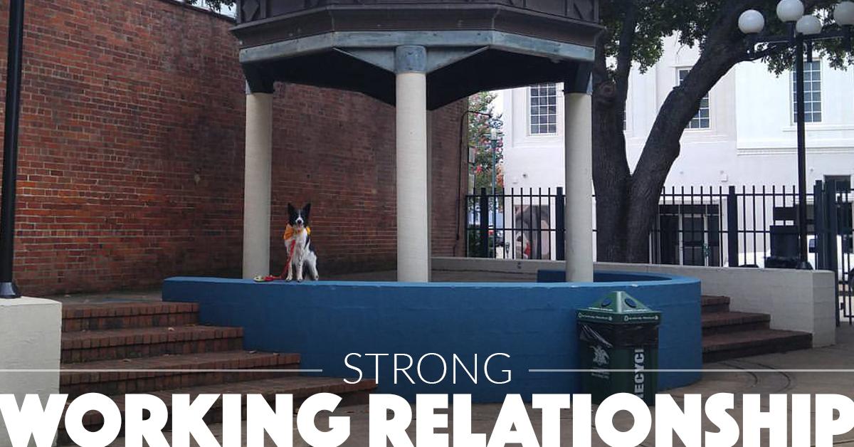 canineworkingrelationship